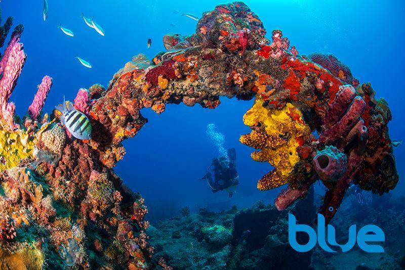 Enjoy scuba diving tours with Blue Water Divers